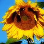August 2012 Garden update