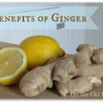 Ginger~Straight from the Root : January's Featured Herb